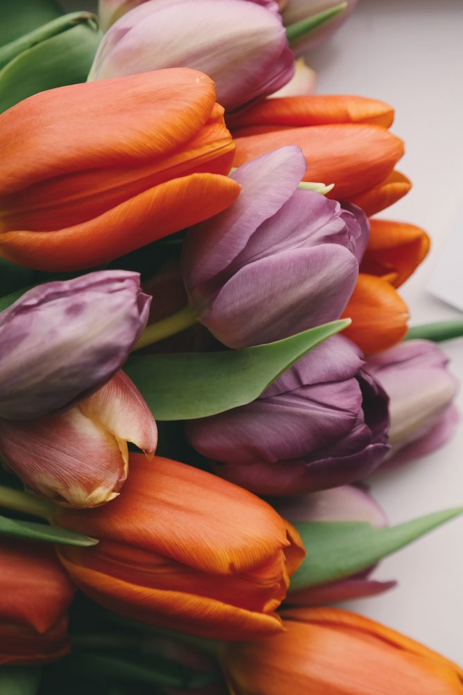 tulipslove